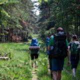 """Ook de bossen van de Veluwezoom zijn mooi om door te wandelen (<a href=""""https://baswetter.photography"""" target=""""_blank"""" rel=""""noopener noreferrer"""">Bas Wetter</a>)"""