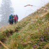 """02 Iets hoger koelt het af en wandelen we in de wolken (<a href=""""https://baswetter.photography"""" target=""""_blank"""" rel=""""noopener noreferrer"""">Bas Wetter</a>)"""