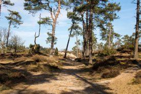We wandelen dit cursusweekend in de bossen van Soest en op de Soesterduinen terwijl we oefenen met navigeren op kaart en kompas (Bas Wetter)