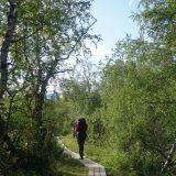 De laatste dag dalen we af en wandelen we tussen de berkenbomen weer terug naar de bewoonde wereld (Roos Lantink)